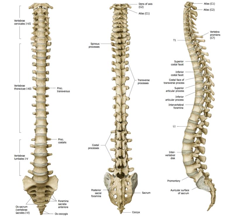 bliv fri for rygsmerter med TOTUM kropsterapi