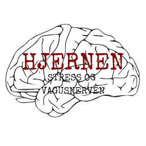 stress og vagusnerven